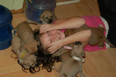 Children and Puggle Puppies how cute